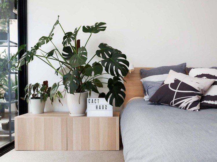 plante-pour-chambre-à-coucher