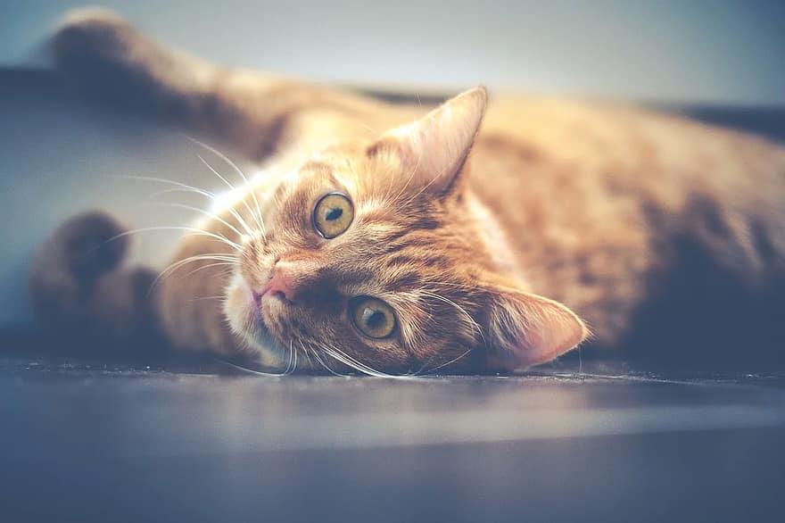 cat-pet