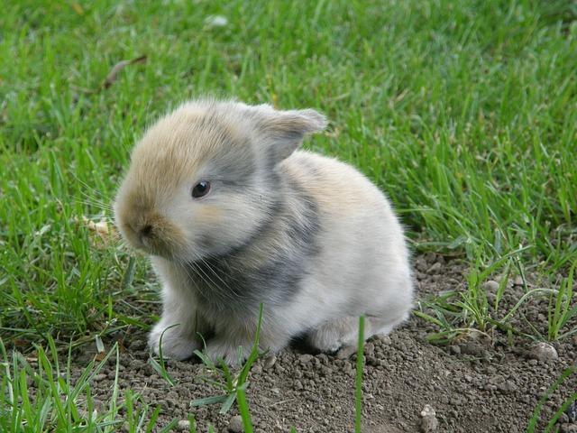 rabbit-2531796_640
